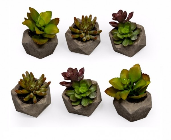 Set of 6 Potted Artificial Succulents
