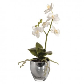 White Baby Orchid in Metallic Glass Pot