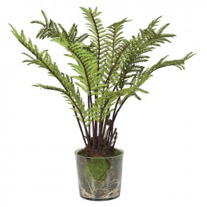 Green Tree Fern with Moss in Pot