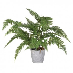 Green Bracken Fern Plant